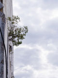 Pflanzen Sie geborenes in einem Sprung des Marmorberges Stockbild