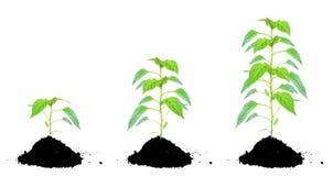 Pflanzen Sie Grün und Boden Stockbilder