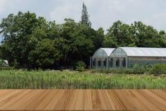 pflanzen Sie Kindertagesstättengewächshaus im Ackerland mit hölzerner Tabelle für Anzeige Lizenzfreie Stockbilder