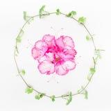 Pflanzen Sie Kranz mit grüner Liane und rosa Blumen auf weißem Tabellenhintergrund Stockbilder