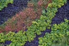 Pflanzen Sie Wand mit üppigen grünen und blauen Farben Nette Hintergrundbeschaffenheit Lizenzfreie Stockfotos