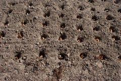 Pflanzen Sie Zwiebeln im Boden in den Löchern Lizenzfreie Stockfotografie