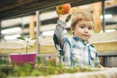 Pflanzen von Apfelbäumen kleiner Jungenanteilapfel und pflanzen Bäume Pflanzen von Apfelbäumen mit wenigem Gärtner errichten lizenzfreie stockbilder