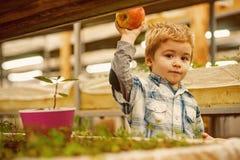 Pflanzen von Apfelbäumen kleiner Jungenanteilapfel und pflanzen Bäume Pflanzen von Apfelbäumen mit wenigem Gärtner errichten lizenzfreies stockbild