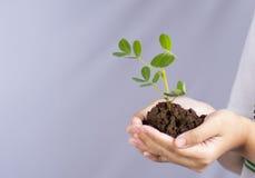 Pflanzen von Bäumen für Erde lizenzfreies stockbild