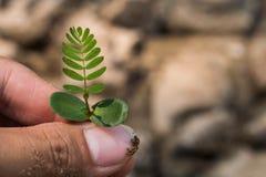 Pflanzen von Bäumen zurück zu Natur Stockfotos