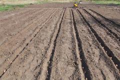 Pflanzen von Kartoffeln auf Gemüsegarten Stockbild