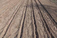 Pflanzen von Kartoffeln auf Gemüsegarten Lizenzfreie Stockfotografie