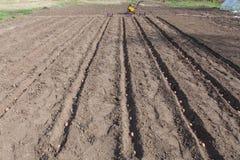 Pflanzen von Kartoffeln auf Gemüsegarten Lizenzfreie Stockbilder
