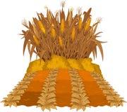 Pflanzen von Mais Stockfotos