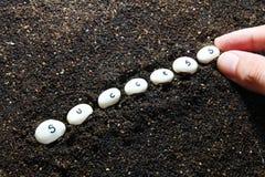 Pflanzen von Samen des Erfolgs Lizenzfreie Stockbilder