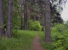 Pflanzenblätter schleppen Stammkoniferenfußwegenblattparkgrasstraßenkiefernfrühlingswaldnaturbaum-Bäume gree des Mooses draußen W Lizenzfreie Stockfotografie
