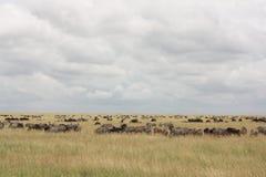 Pflanzenfresser in Nationalpark Serengeti stockbilder