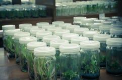Pflanzengewebekultur Stockbilder