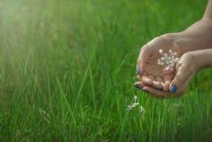 Pflanzenschutz lizenzfreie stockbilder