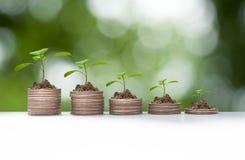 Pflanzenwachstum auf Münzenstapel Stockfotografie