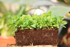 Pflanzenwurzeln Lizenzfreies Stockbild