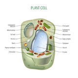Pflanzenzelle stock abbildung