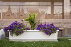 Pflanzer außerhalb der Marmorwand Lizenzfreie Stockbilder