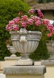 Pflanzer im Garten während des Sommers Stockbilder