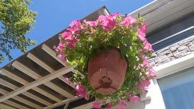 Pflanzertopfblume baumeln im Wind stock video