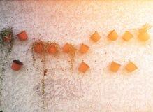 Pflanzerwandhintergrund Stockfotografie