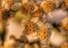 Pflanzt kleine Spezies Stockfotografie