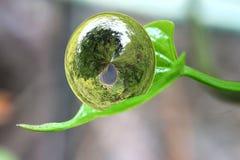 Pflanzt schützende Welt Lizenzfreie Stockbilder