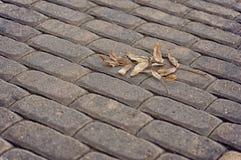 Pflastersteine in Form von Ziegelsteinen Stockfoto