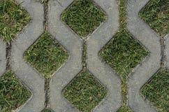 Pflasterung mit grünem Gras Stockbilder