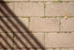 Pflasterung mit Schatten und Blatt Stockbild