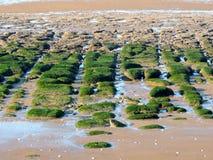 Pflasterung sandtone Bildungen auf Hunstanton-Strand Norfolk Stockbild