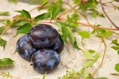 Pflaume und Blätter von wilden Trauben Lizenzfreie Stockfotos