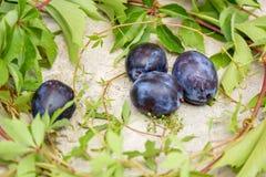 Pflaume und Blätter von wilden Trauben Stockfotos