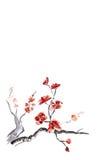 Pflaumeblüte lizenzfreie abbildung