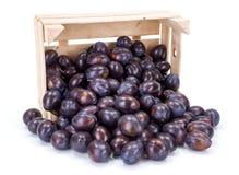 Pflaumen (Prunus) in der hölzernen Kiste Lizenzfreie Stockfotos
