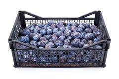 Pflaumen (Prunus) in der Plastikkiste Lizenzfreie Stockfotografie
