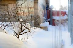 Pflaumenbaum in der Schneewehe Stockbild