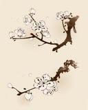 Pflaumenblüte mit Linie Design Stockfotografie