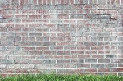 Pflaumenfarbebacksteinmauer mit grünem Gras stockbilder