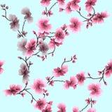 Pflaumenniederlassung des nahtlosen Musters des Aquarells rosa blühende auf einem Türkishintergrund Stockfotografie