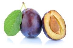 Pflaumenpflaumenpflaumen beschneiden die frische Frucht, die auf Weiß lokalisiert wird Stockfotos