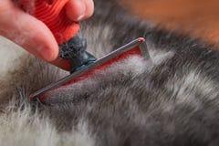 Pflegen der Undercoat-Hunde Kämmen Sie heraus Hundewollbürste, Nahaufnahme Konzepthygiene und -sorgfalt für Hunde Problem-Frühlin stockfotos