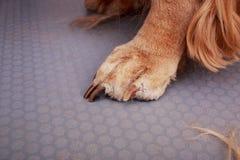 Pflegen des Haares des Hundes Lizenzfreie Stockfotos