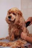 Pflegen des Haares des Hundes Lizenzfreie Stockfotografie