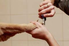 Pflegen des Haares des Hundes Lizenzfreie Stockbilder