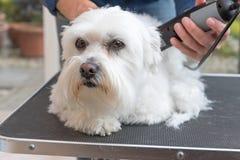 Pflegen des Hundes durch Elektrorasierer lizenzfreies stockfoto