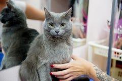 Pflegen einer Katze stockfotografie