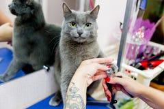 Pflegen einer Katze stockbilder