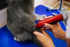 Pflegen einer Katze Lizenzfreies Stockfoto